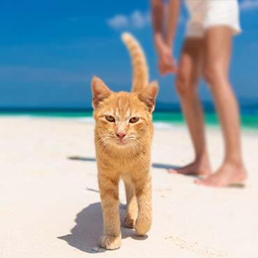 เที่ยวเกาะไข่ เที่ยวเกาะไข่แมว